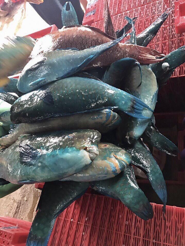 Fresh Parrotfish Whole Round