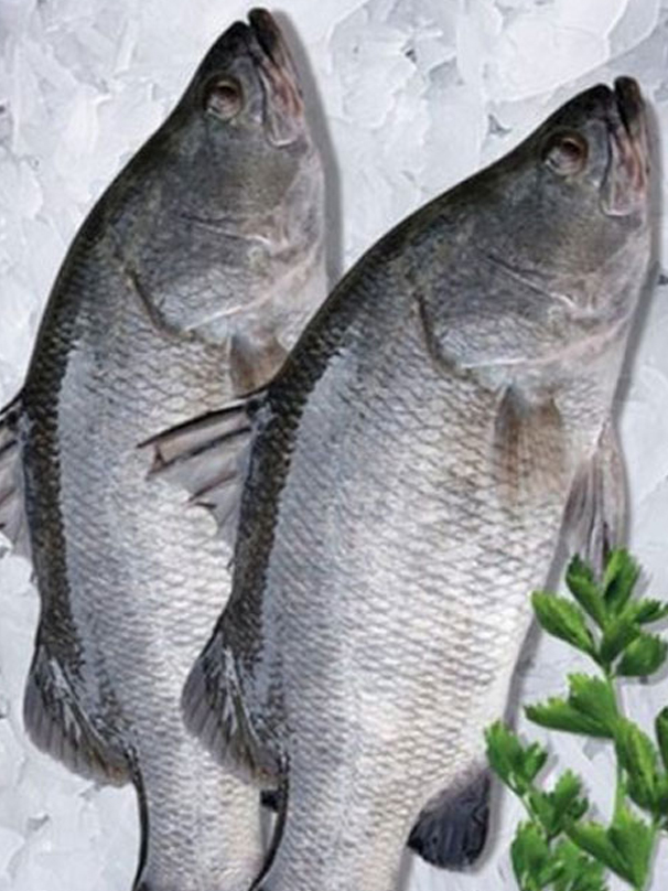 FRESH BARRAMUNDI