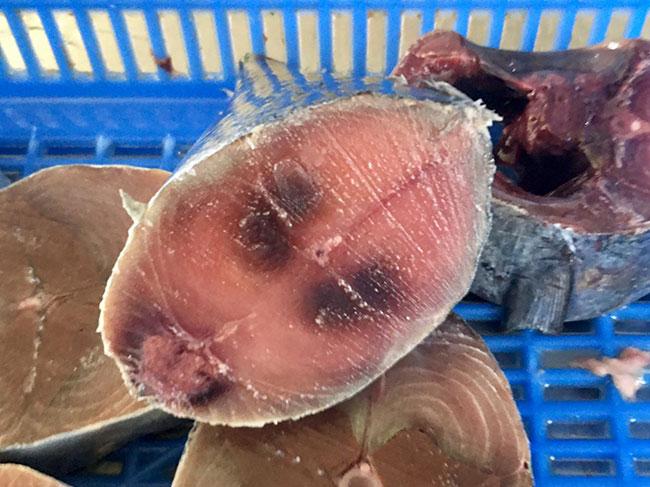 Frozen Skipjack Tuna Steak