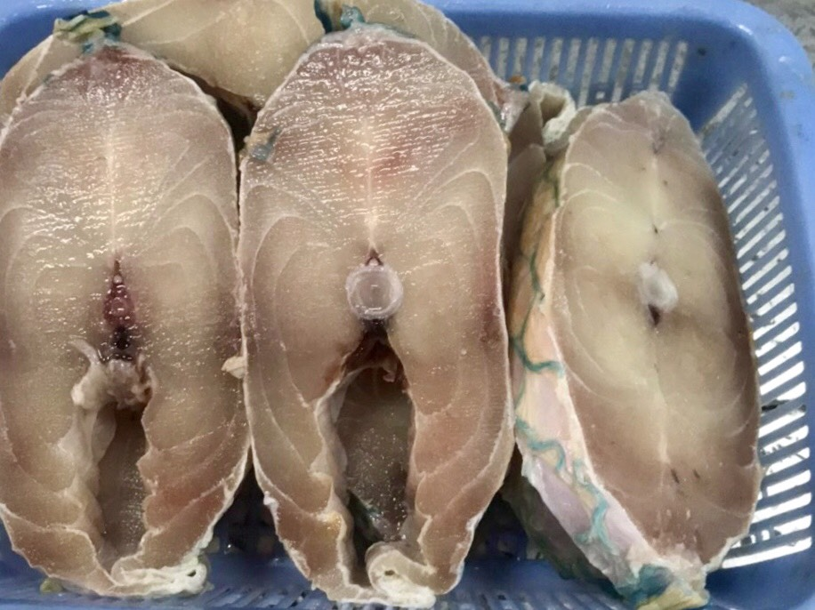 Frozen Parrotfish Steak